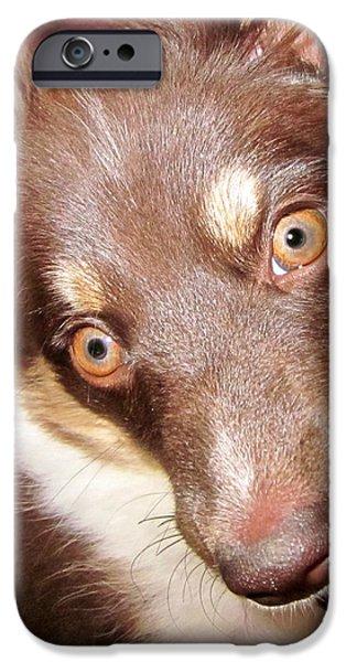 Talking Dog iPhone Case by Gwyn Newcombe