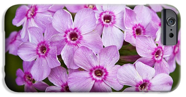 Phlox iPhone Cases - Tall Garden Phlox iPhone Case by Teresa Mucha