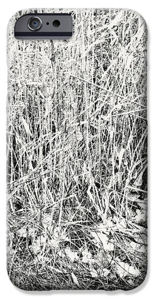 Pen And Ink iPhone Cases - Tangled Weeds 3 iPhone Case by Anne Cameron Cutri