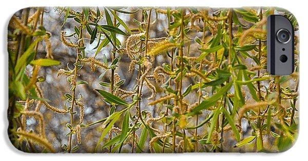 Willow Lake iPhone Cases - Tangled Willow catkins  iPhone Case by LeeAnn McLaneGoetz McLaneGoetzStudioLLCcom