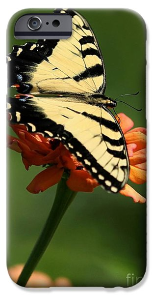 Piano iPhone Cases - Tantalizing Tiger Swallowtail Butterfly iPhone Case by Sabrina L Ryan
