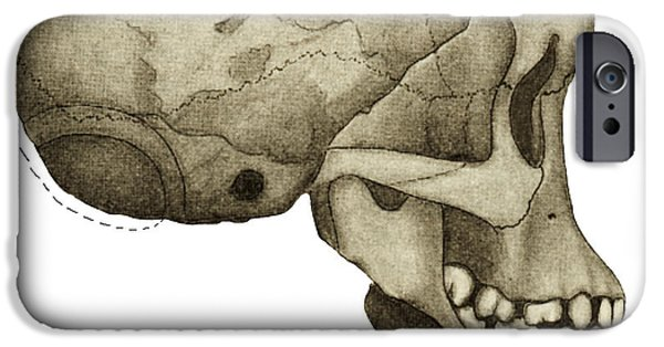 Fossil Reconstruction iPhone Cases - Taung Child Skull iPhone Case by Sheila Terry