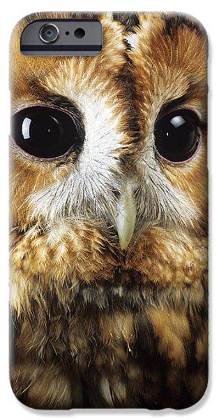 United iPhone Cases - Tawny Owl iPhone Case by David Aubrey