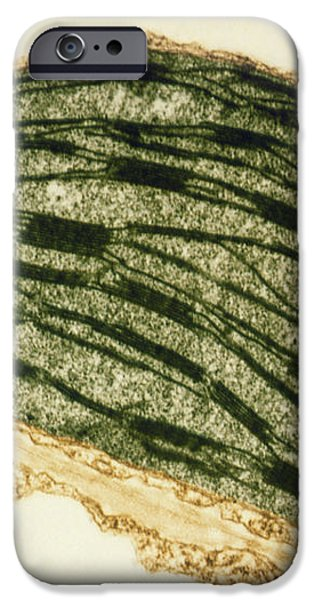 Tem Of A Chloroplast From A Tobacco Leaf iPhone Case by Dr Jeremy Burgess