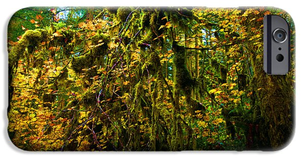 State Parks In Oregon iPhone Cases - Temperate Rain Forest iPhone Case by Adam Jewell