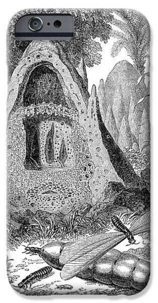 Termite Mound And Castes iPhone Case by