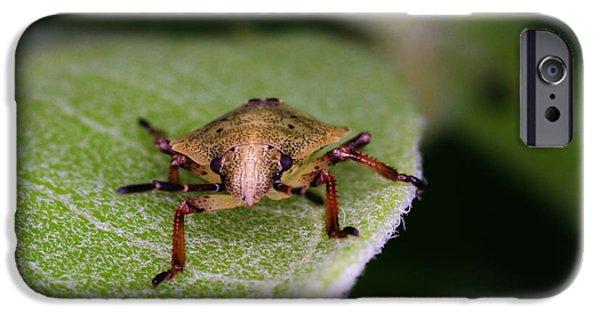 Terrestrial iPhone Cases - Terrestrial Turtle Bug iPhone Case by Ted Kinsman