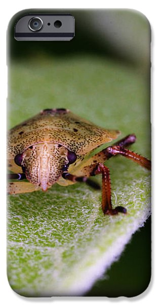 Terrestrial Turtle Bug iPhone Case by Ted Kinsman