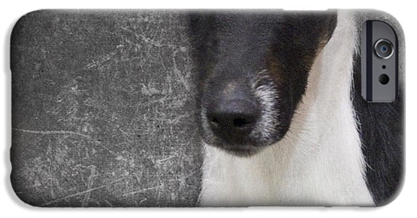 Terrier iPhone Cases - Terrier iPhone Case by Rebecca Cozart