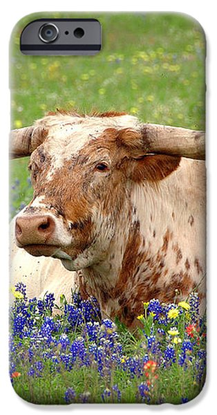Texas Longhorn in Bluebonnets iPhone Case by Jon Holiday