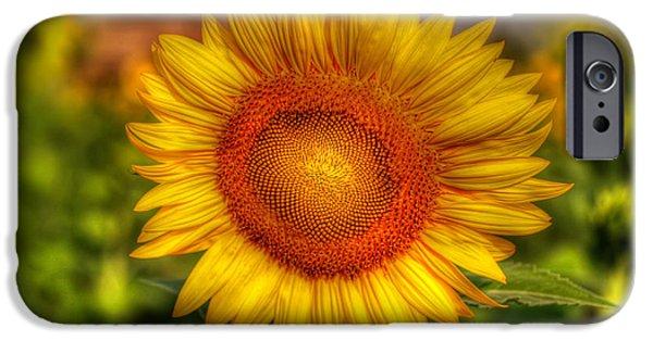 Stamen Digital iPhone Cases - Thai Sunflower iPhone Case by Adrian Evans