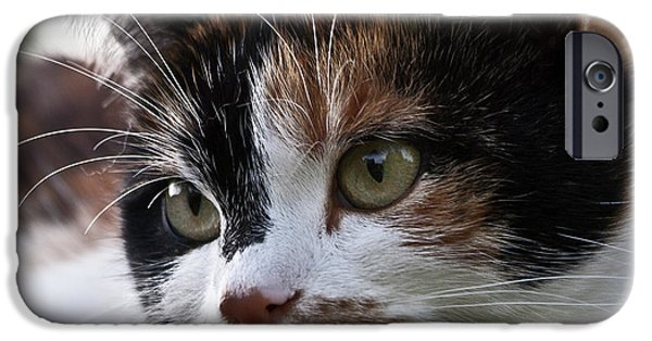 Housecat iPhone Cases - That is Lolle iPhone Case by Heiko Koehrer-Wagner