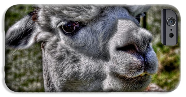 Spit iPhone Cases - The Alpaca iPhone Case by David Patterson