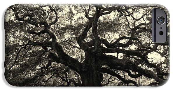 Old Trees iPhone Cases - The Angel Oak iPhone Case by Susanne Van Hulst