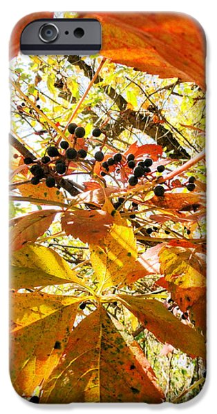 the beauty in dying iPhone Case by Trish Hale