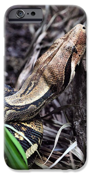 Boa Constrictor iPhone Cases - The Boa iPhone Case by JC Findley
