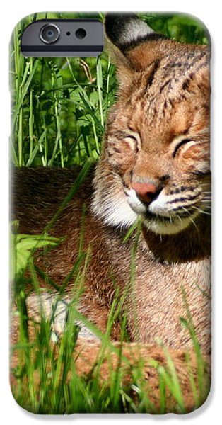 The Bobcat's Afternoon Nap iPhone Case by Laurel Talabere