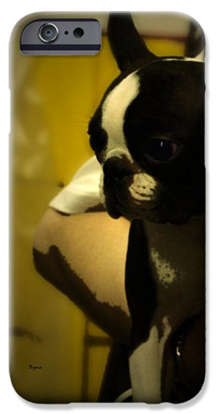 The Boston Bull Terrier  iPhone Case by Steven  Digman