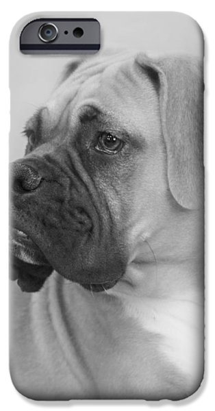 Boxer Dog iPhone Cases - The Boxer Dog - the Gentleman amongst dogs iPhone Case by Christine Till