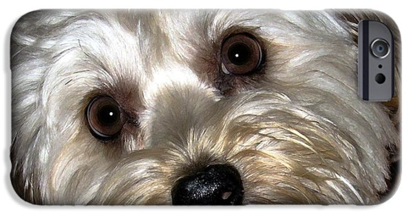 Dog Close-up Digital Art iPhone Cases - The Case of the Missing Slipper iPhone Case by Dale   Ford