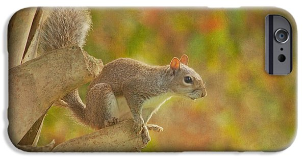 Fox Squirrel iPhone Cases - The Climber iPhone Case by Kim Hojnacki