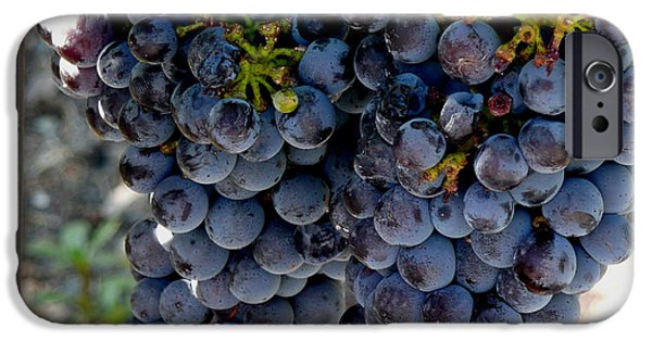 Concord Grapes iPhone Cases - The Concord iPhone Case by Richard Ortolano