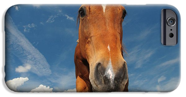 Love The Animal iPhone Cases - The Curious Horse iPhone Case by Paul Ward