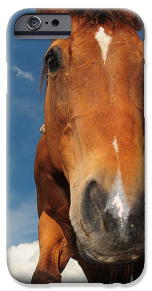 The Curious Horse iPhone Case by Paul Ward