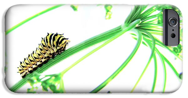 Caterpillar iPhone Cases - The Dill Express iPhone Case by Amy Tyler