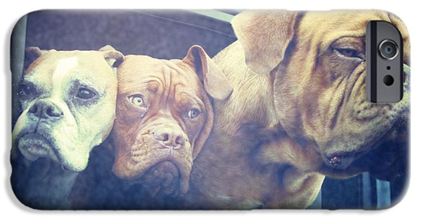 Boxer iPhone Cases - The Dog Taxi Is A Hummer iPhone Case by Nina Prommer