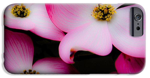 Lewiston iPhone Cases - The Dogwood Flower iPhone Case by David Patterson