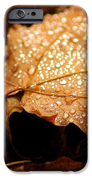 The enlightened Maple leaf iPhone Case by LeeAnn McLaneGoetz McLaneGoetzStudioLLCcom