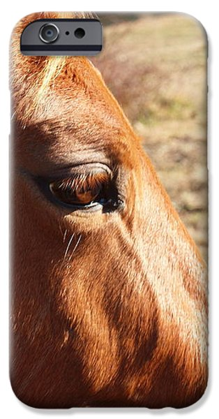 the eye of the horse iPhone Case by Robert Margetts