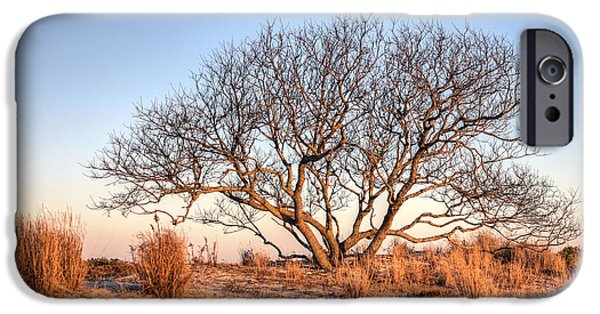 Salt Air iPhone Cases - The Family Tree iPhone Case by JC Findley