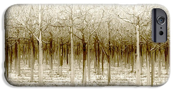 Forest iPhone Cases - The Forest for the Trees iPhone Case by Holly Kempe