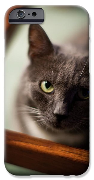 Cat iPhone Cases - The Gaze iPhone Case by Mike Reid