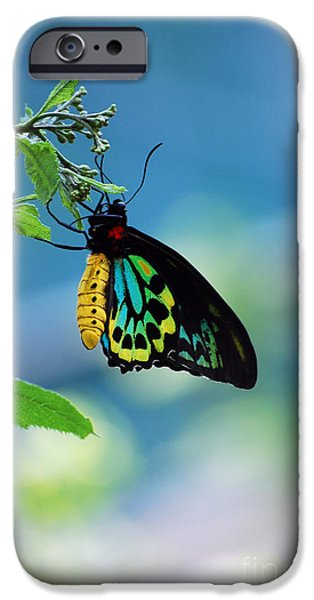 Goliath iPhone Cases - The Goliath Birdwing iPhone Case by Robert Meanor