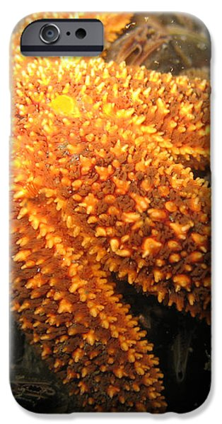The Great Starfish iPhone Case by Paul Ward