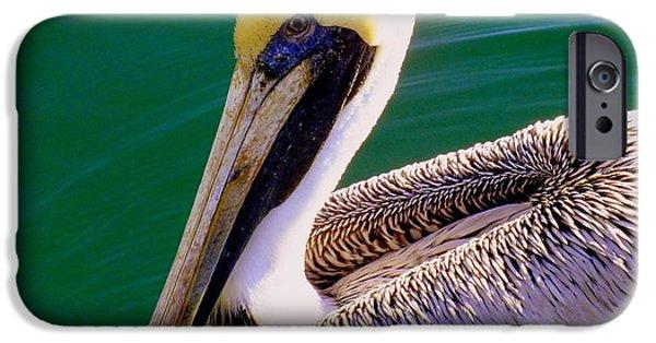 Sea Birds iPhone Cases - The Happy Pelican iPhone Case by Karen Wiles