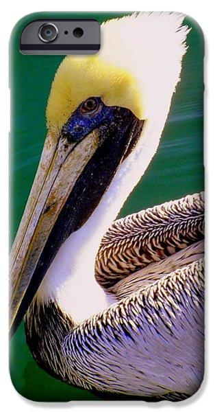 The Happy Pelican iPhone Case by KAREN WILES