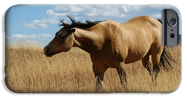 The Horse iPhone Cases - The Horse iPhone Case by Ernie Echols