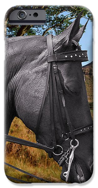 The horse - God's gift to man iPhone Case by Christine Till