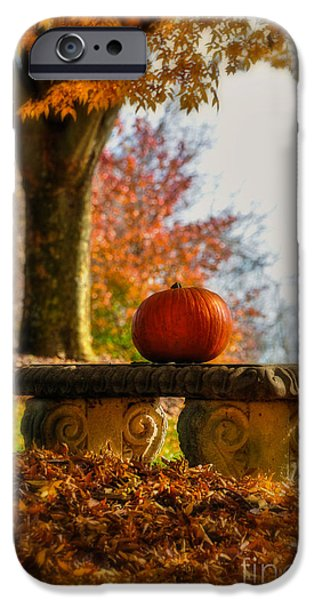 Lois Bryan iPhone Cases - The Last Pumpkin iPhone Case by Lois Bryan