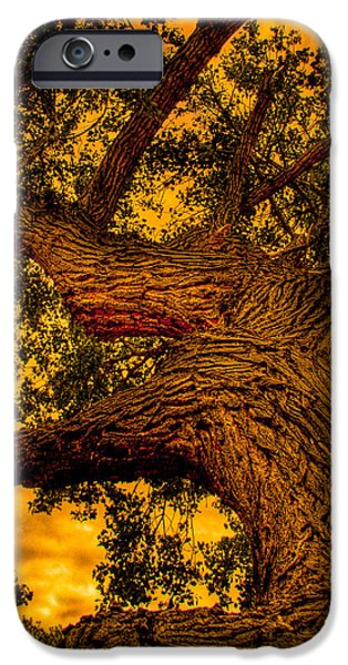Oak Creek iPhone Cases - The Oak Tree at Red Rock Canyon iPhone Case by David Patterson