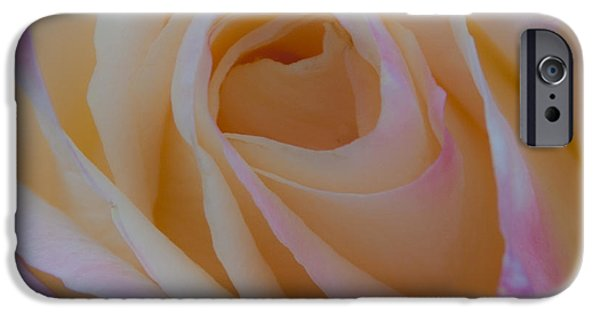 Princess Diana iPhone Cases - The Princess Diana Rose iPhone Case by David Patterson