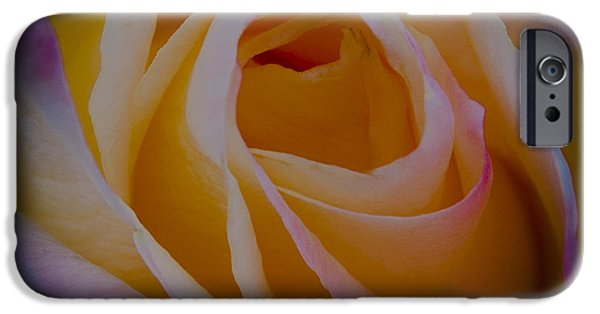 Princess Diana iPhone Cases - The Princess Diana Rose II iPhone Case by David Patterson