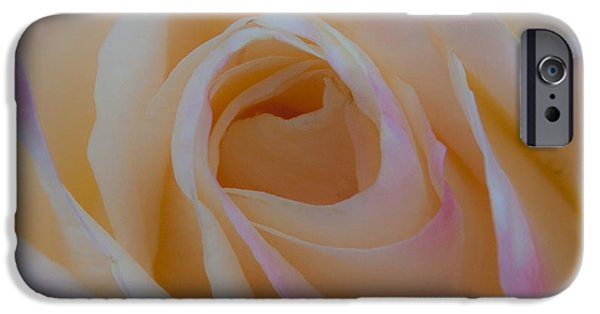 Princess Diana iPhone Cases - The Princess Diana Rose IV iPhone Case by David Patterson