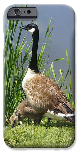 Duckling Photography iPhone Cases - The Protector iPhone Case by Deborah Benoit