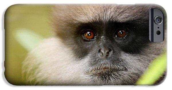 White Beard iPhone Cases - The Purple-Faced Langur. Nuwara Eliya.Sri Lanka iPhone Case by Jenny Rainbow