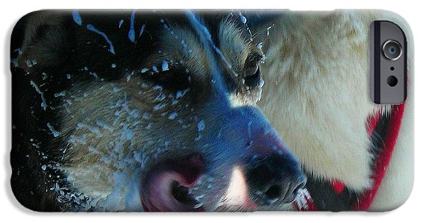 Sled Dog iPhone Cases - The Race ... iPhone Case by Juergen Weiss